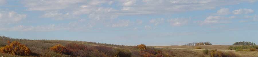 sky over grassland